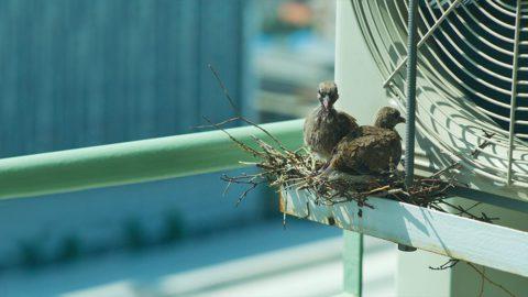 Birds nesting around Mini-split AC