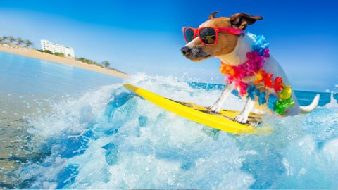 Dog surfing - how to keeps dog cool in summer